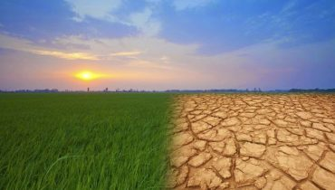 Exigente Pedoclimatice si de Relief