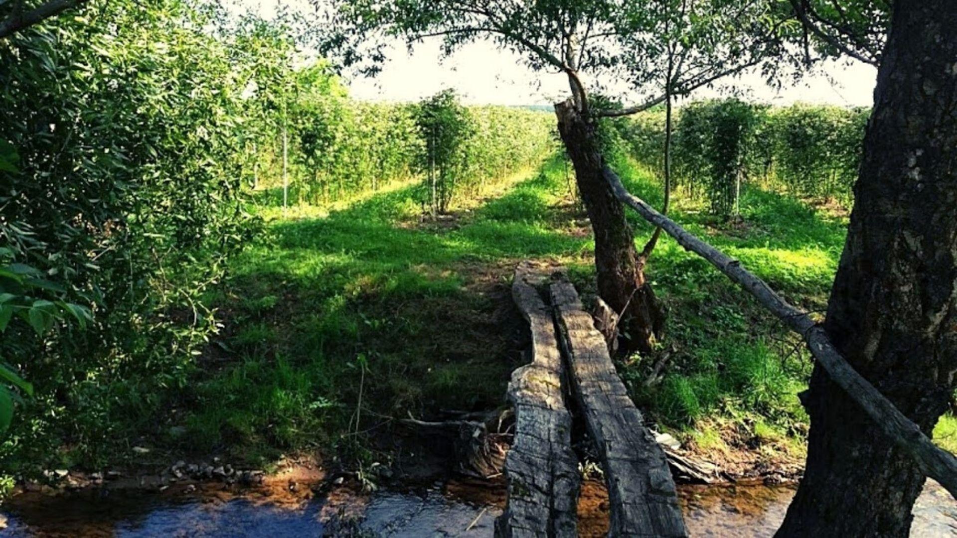 plantatie de mur azi - muri.ro