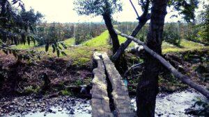 punte in plantatie de mur tanara